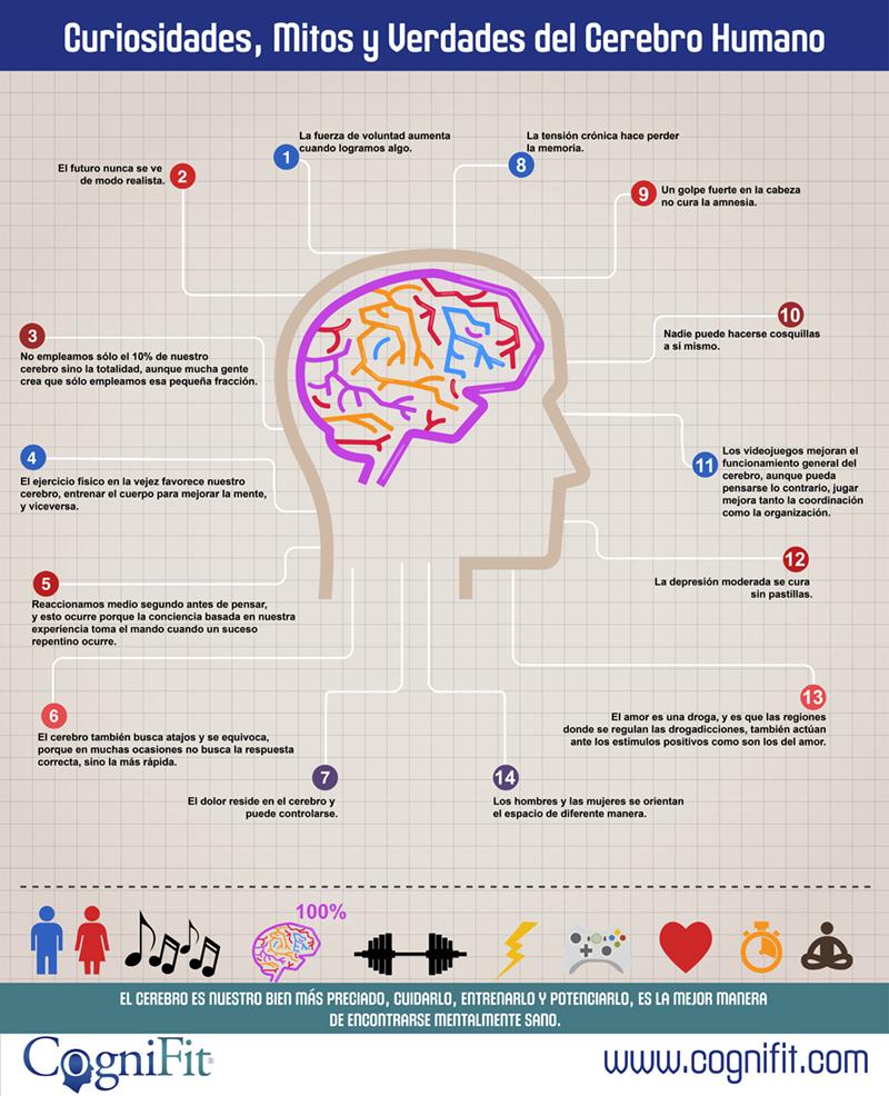 Infografía curiosidades cerebro humano