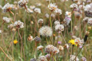 alergias frecuentes primavera