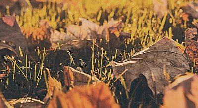 enfermedades del otoño - AESEG